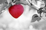 apple-570965_150